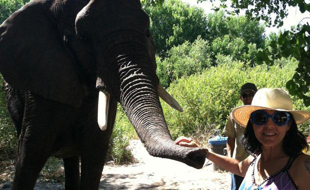 Joss Stone Elephant